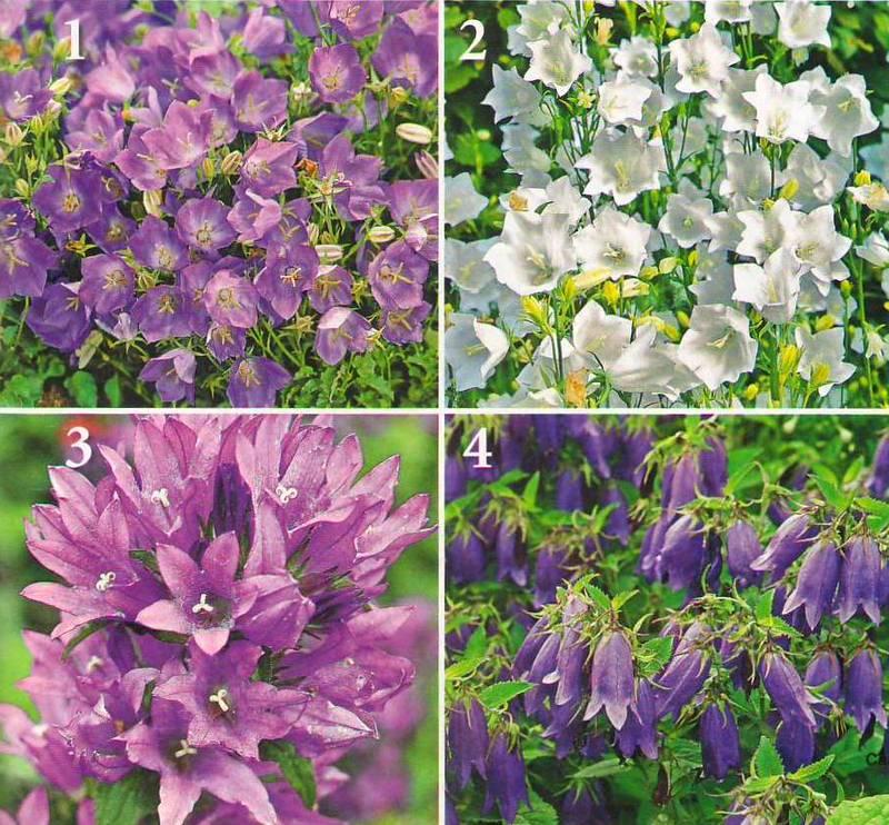 Сад как образ жизни : Цветники в вашем саду, часть 2