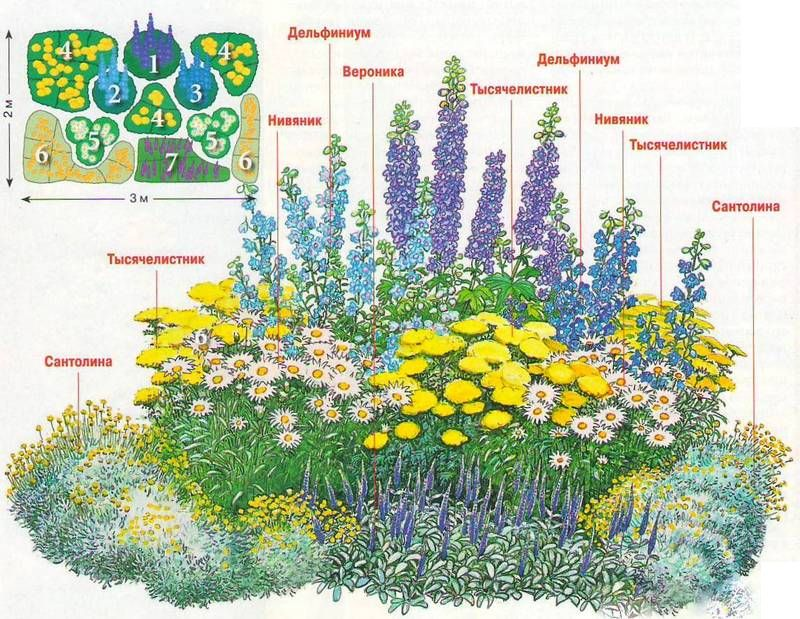 Композиции из многолетних цветов