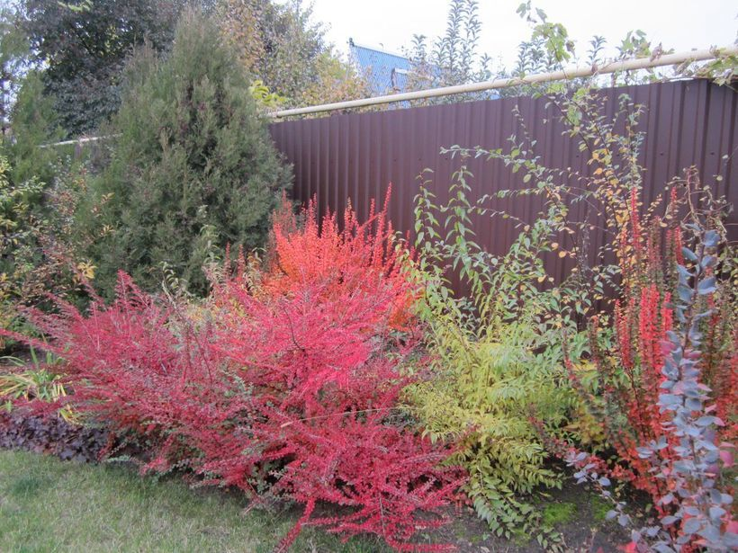 Что сажать осенью из кустарников