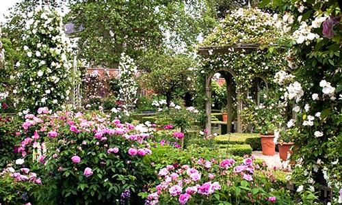 Вертикальное озеленение беседки с помощью плетистых роз